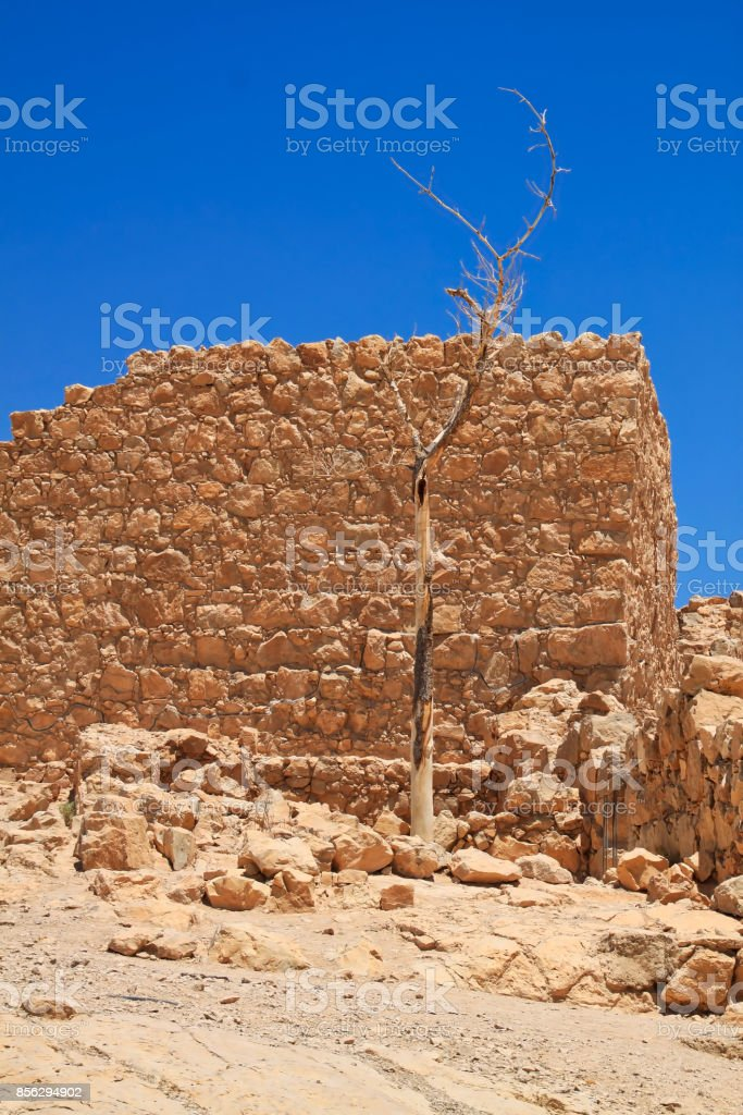 Dead tree reigns in front of some rubble of ancient city ruins of Masada stock photo