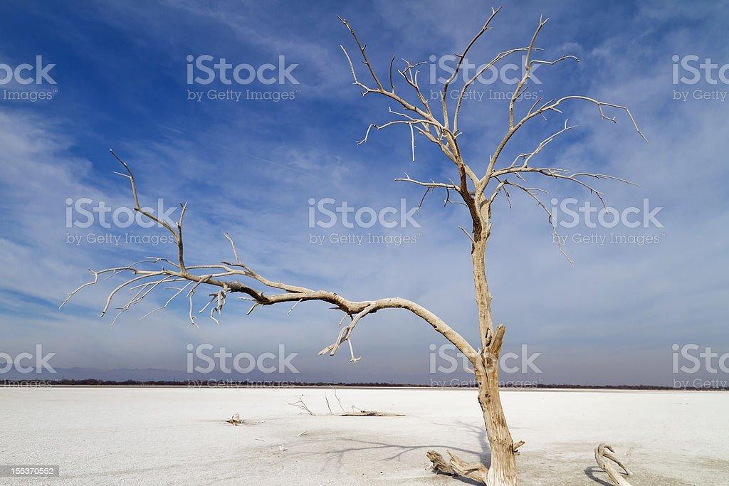 Dead Tree Salton Sea royalty-free stock photo