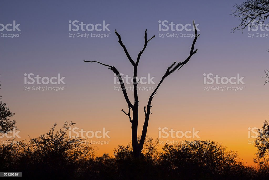 Dead tree silhouetted against a colorful sky 1 stock photo