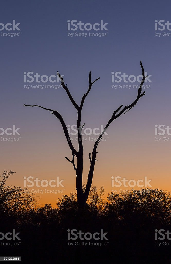 Dead tree silhouetted against a colorful sky 2 stock photo