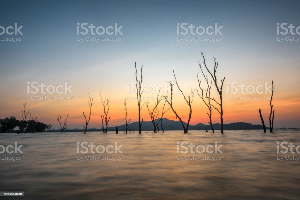Dead tree standing at the flood of lake at sunset stock photo