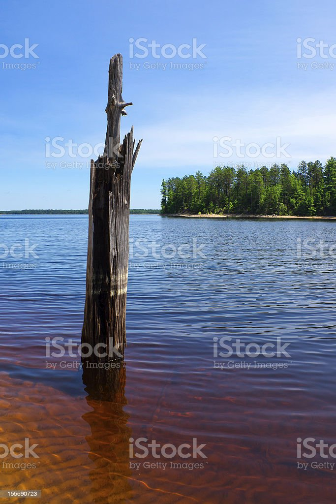 Dead Tree Stands in Beautiful, Clear Lake Waters royalty-free stock photo