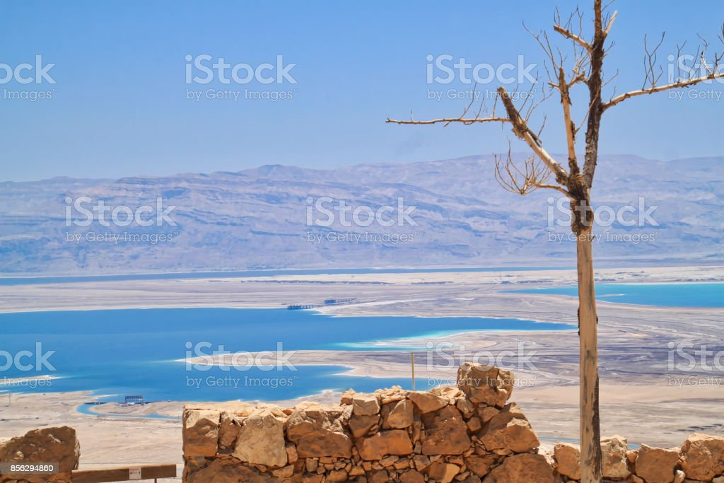 Dead tree stands in forefront of view from Masada archaeological ruins of the Dead Sea and Jordanian mountains in background stock photo
