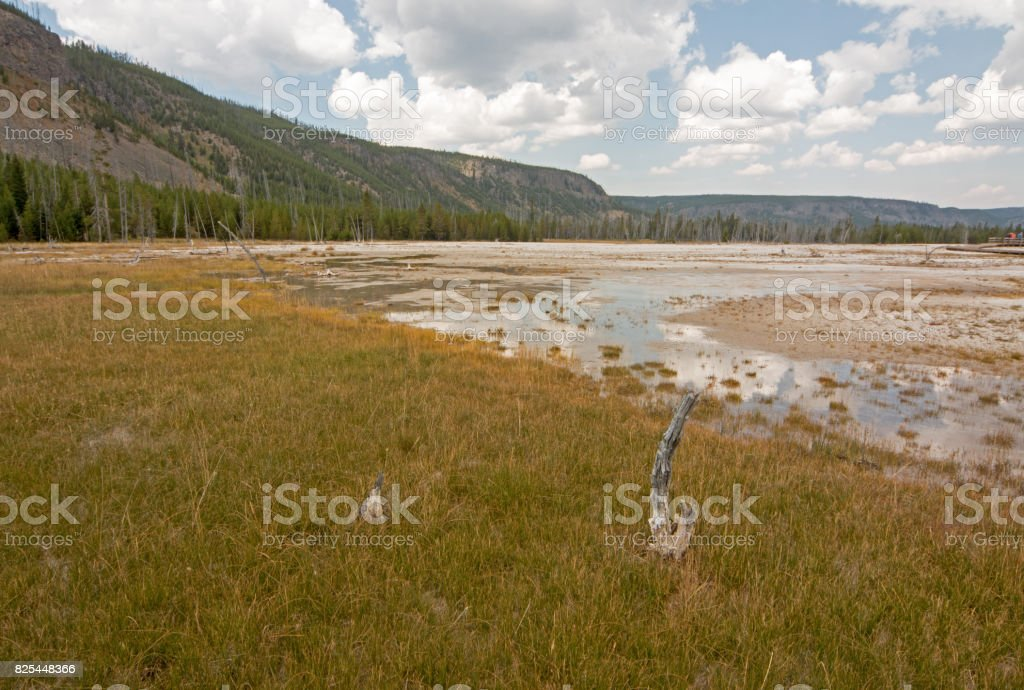 Dead Tree Stump in Black Sand Geyser Basin in Yellowstone National Park in Wyoming USA stock photo
