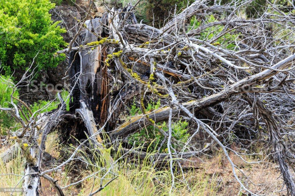 Dead tree stump stock photo