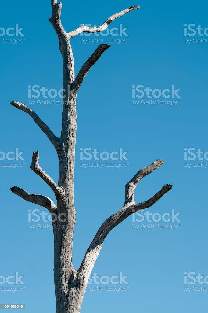 Dead tree stump royalty-free stock photo
