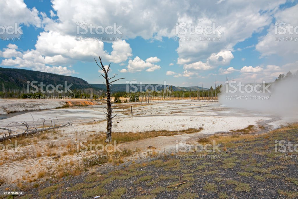 Dead Tree trunk in Black Sand Geyser Basin in Yellowstone National Park in Wyoming USA stock photo
