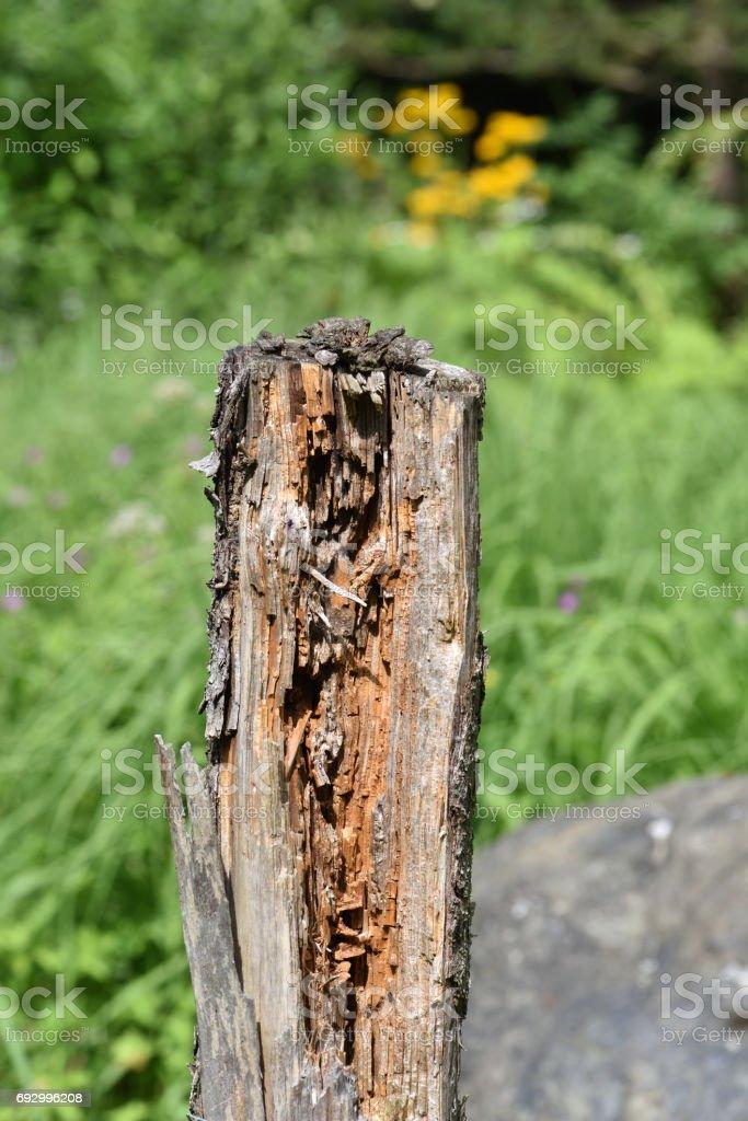 dead tree trunk, stock photo