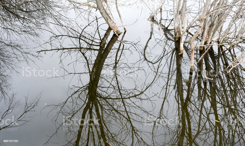 Dead Tree Water Pond Reflection stock photo