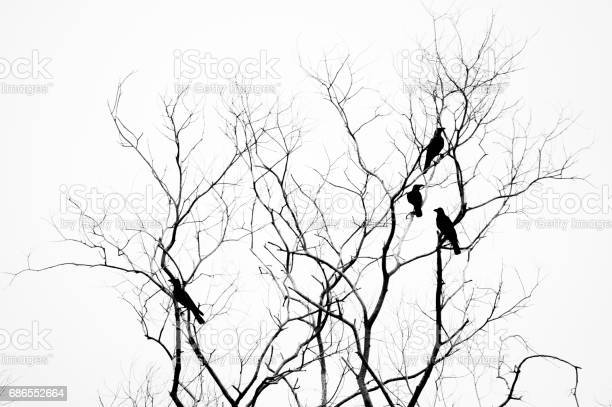 Free sitting on branch Images, Pictures, and Royalty-Free