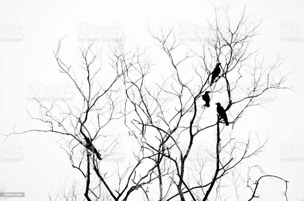 Dead tree with birds silhouette stock photo