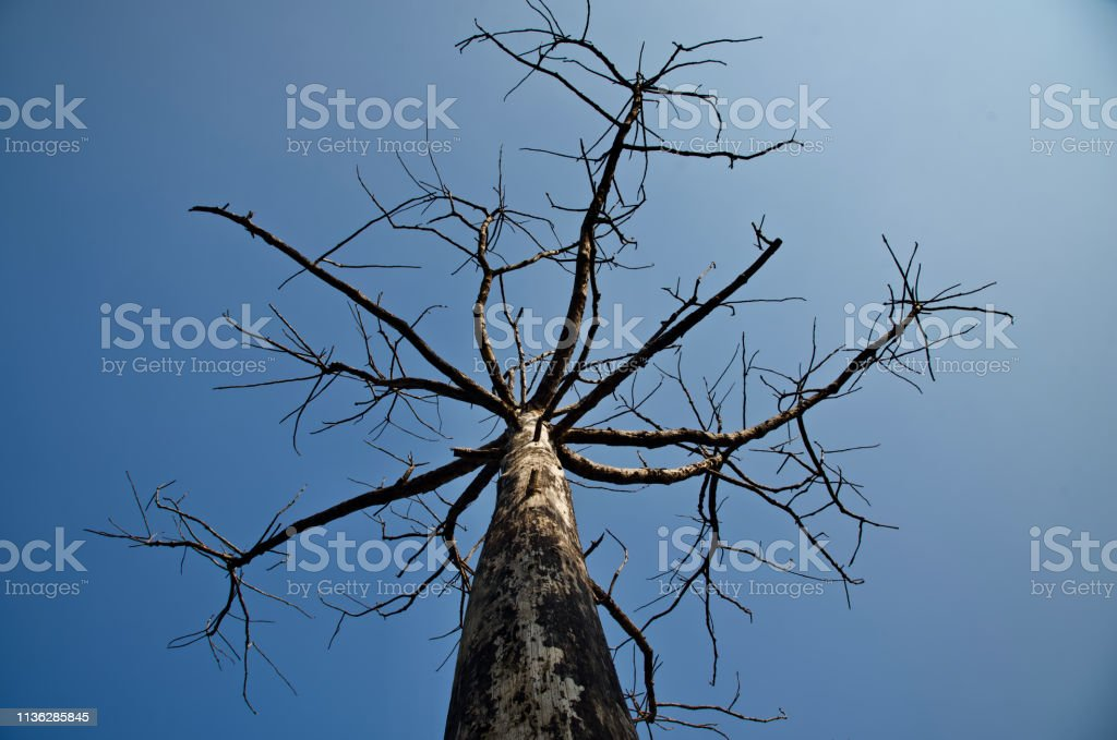 A dead tree with branches unique photo stock photo