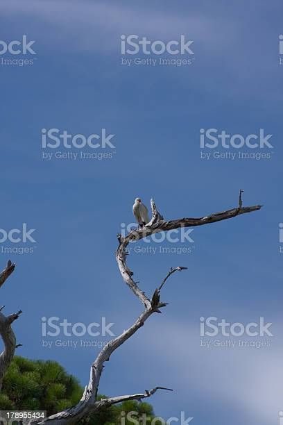 Photo of Dead Tree with Ibis on Top