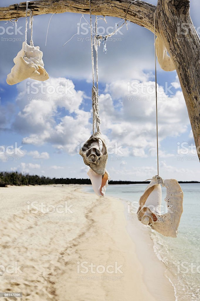 dead tree with shells on a beach in cozumel royalty-free stock photo