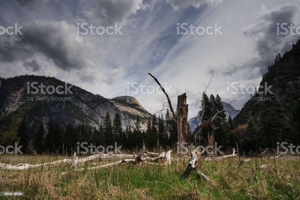 Dead Tree: Yosemite Valley stock photo