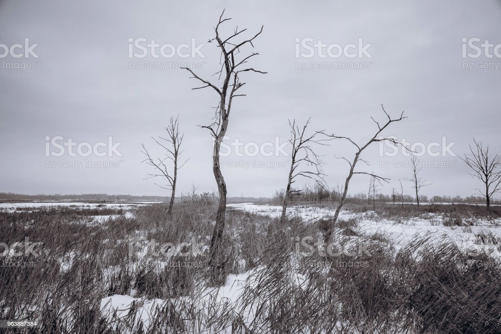 Dead trees and dry grass at wateland in winter, black and white - Royalty-free Art Stock Photo
