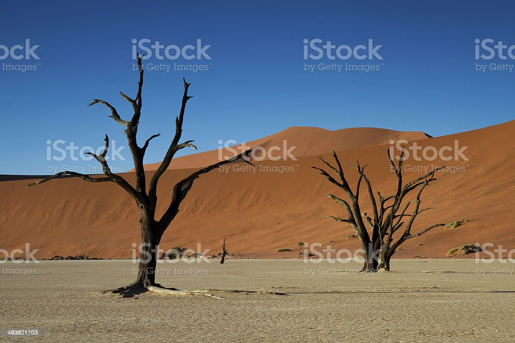 Dead trees and Red Sand Dunes stock photo