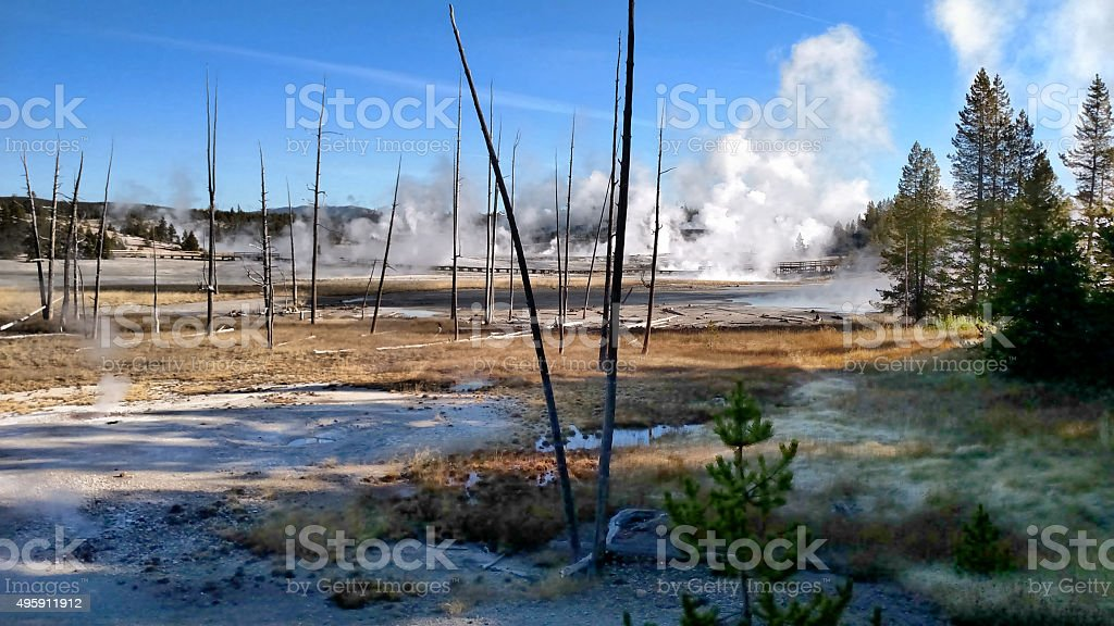 Dead Trees and Steam at Norris Geyser Basin stock photo