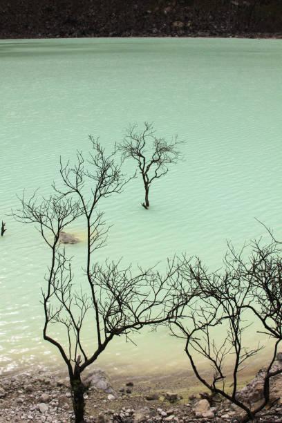 arboles muertos en el lago volcán kawah putih, bandung - kawah putih fotografías e imágenes de stock