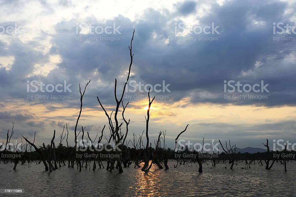 Dead Trees by Lake royalty-free stock photo