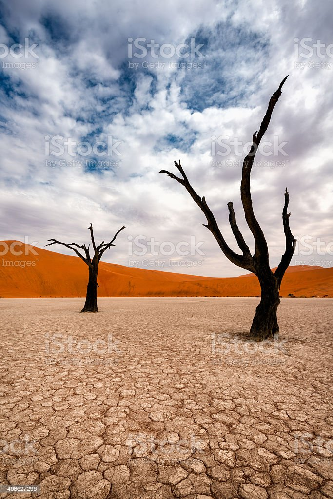 Dead trees in Dead Vlei Naukluft Park, Namibia stock photo