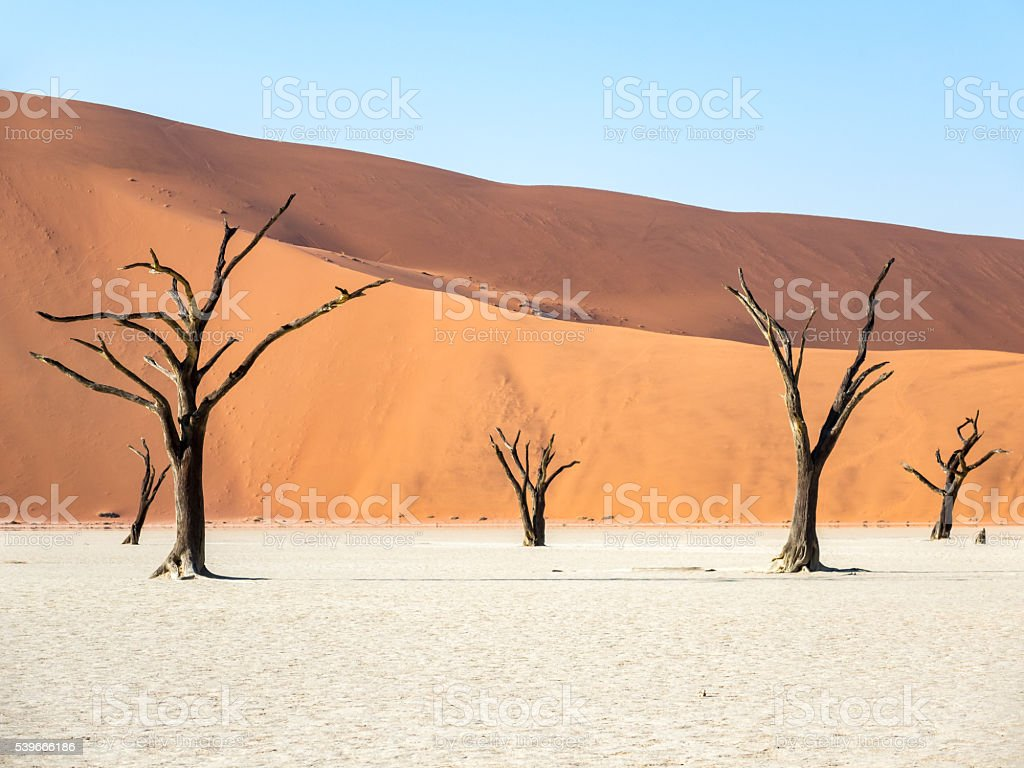 Dead Trees in Deadvlei, Sossusvlei, Namibia stock photo