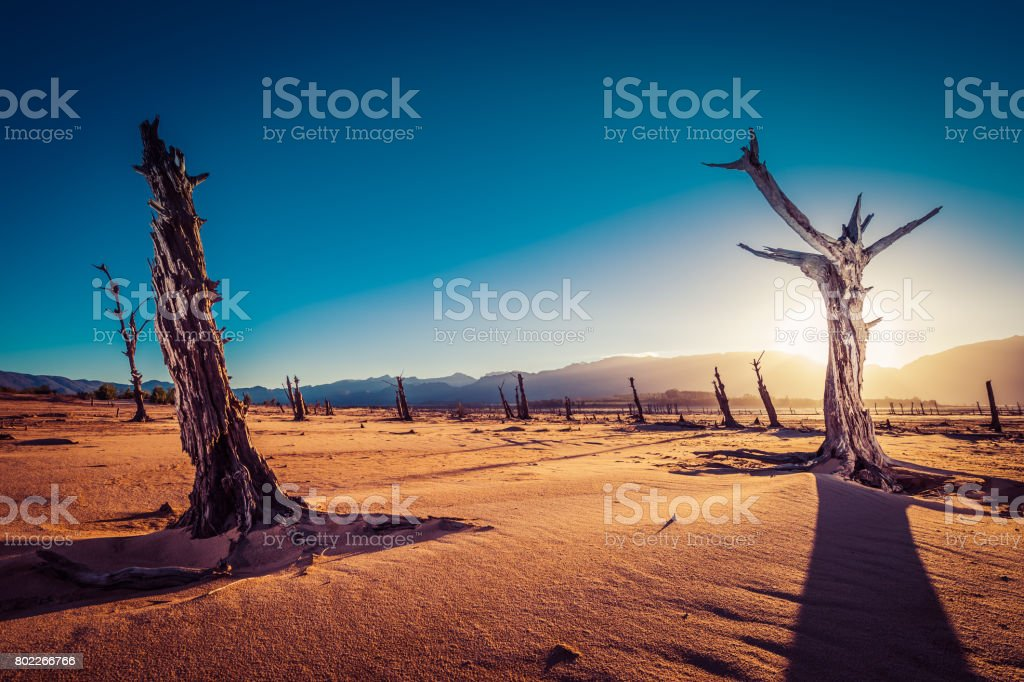 Dead trees in drought-stricken South Africa stock photo