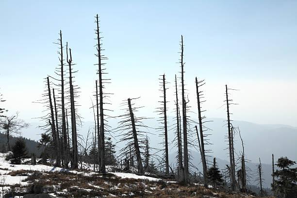 dead Bäume im Wald – Foto