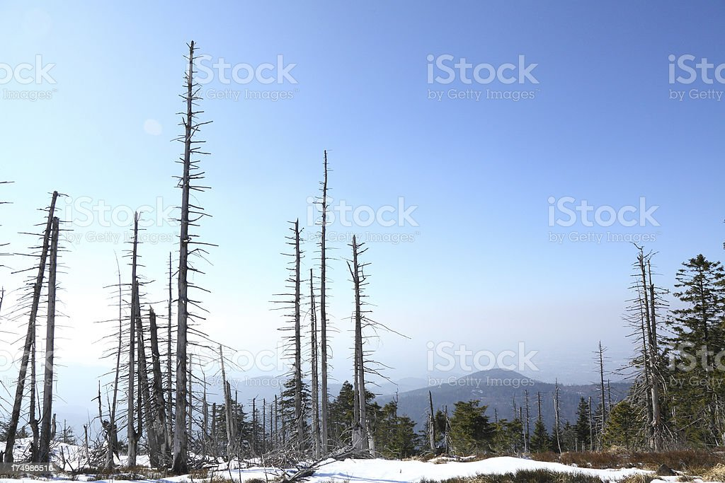 dead trees in forest stock photo