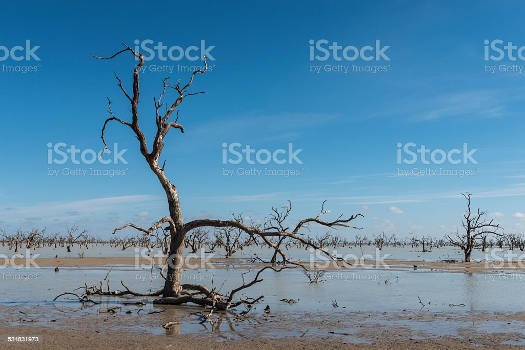 Dead Trees in Menindee Lakes, Australia stock photo