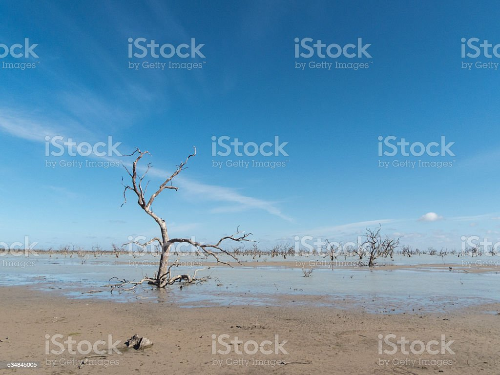 Dead Trees in Menindee Lakes, NSW, Australia stock photo