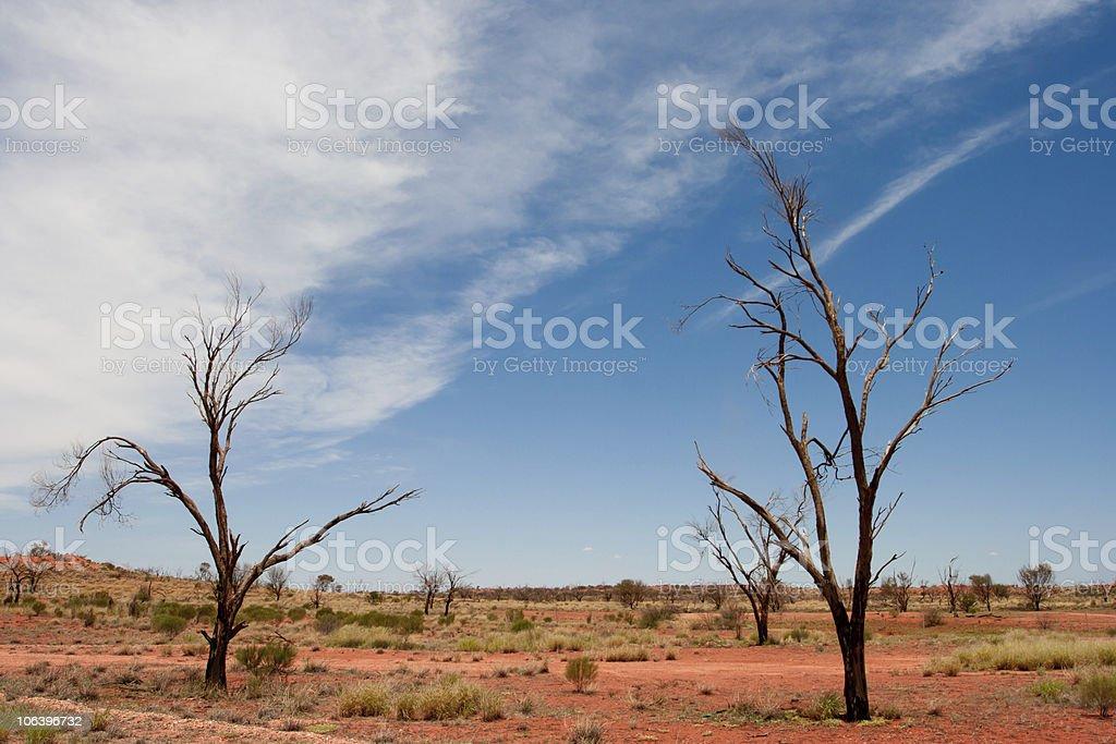 Dead Trees in the Desert,Australia royalty-free stock photo