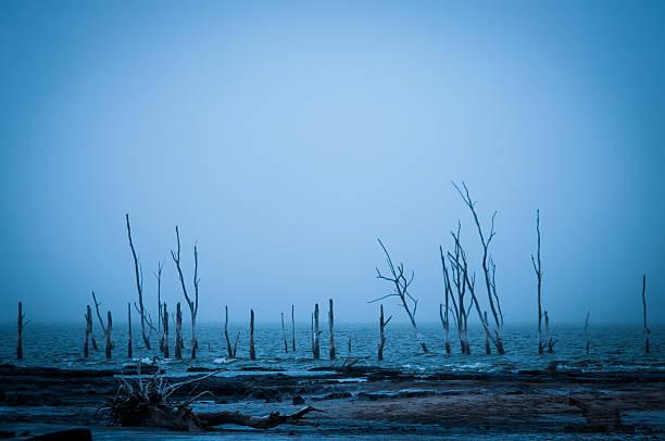 Muerto árboles en el mar en Córdoba, argentina - foto de stock