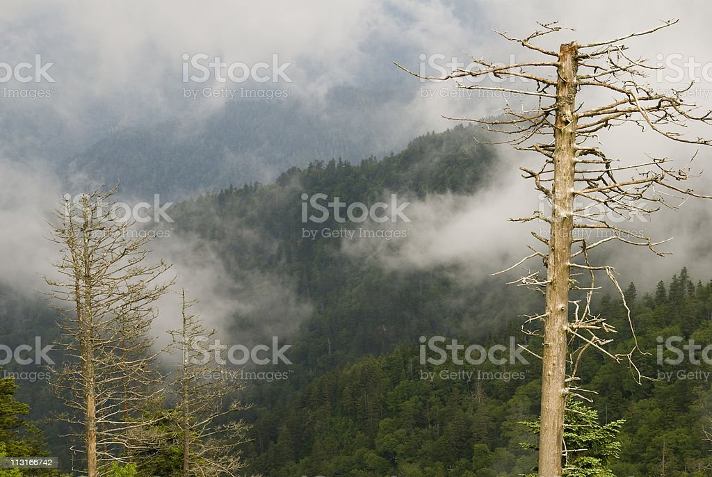 Dead trees in the Smoky Mountains stock photo