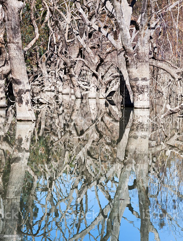 dead trees Menindee Lakes Australia stock photo