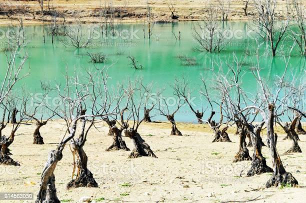 Dead trees near and in el gastor reservoir zahara de la sierra picture id914563030?b=1&k=6&m=914563030&s=612x612&h=hbe1oxubylblz8wbiywqonc5qfxuddhwtbmcl2g1fto=