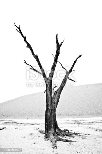 Dead trees of Deadvlei near Sossusvlei in the Namib dersert Namibia