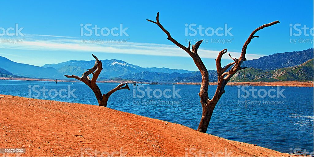 Dead Trees on the shoreline of drought stricken Lake Isabella stock photo