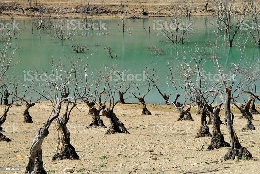 Dead trees royalty-free stock photo