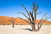 istock Dead Trees 144221826