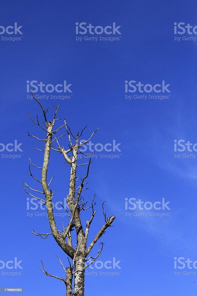 Muerto de árboles foto de stock libre de derechos
