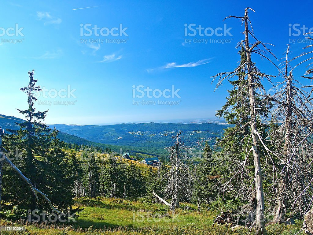 Dead trees stock photo