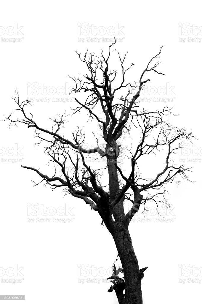 Muerto de árboles - foto de stock