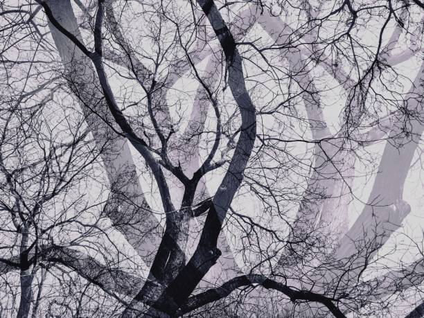 tote bäume mit schatten in schwarzen und weißen farben. - number 13 stock-fotos und bilder