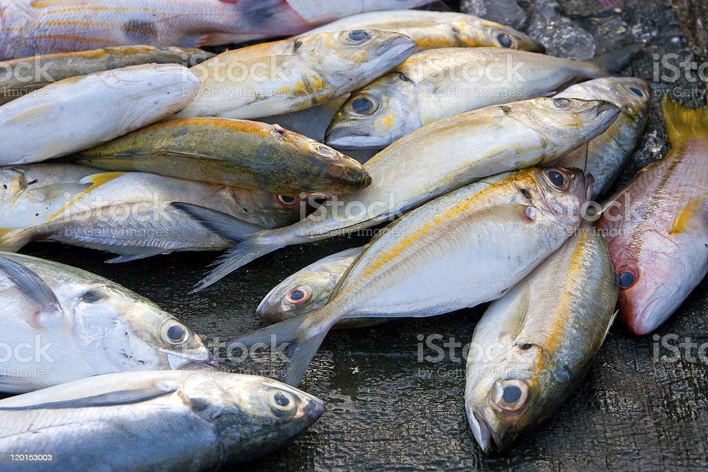 Dead tropical fish royalty-free stock photo