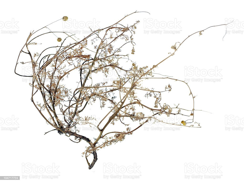 Dead Tumbleweed stock photo