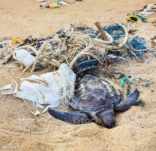 Dead turtle in fishing nets picture id506707518?b=1&k=6&m=506707518&s=612x612&h=voi87fgp8axubjcc85spccsmcbsqz4ucnjhgtldiozm=