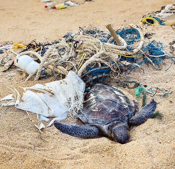 Toten Schildkröte auf Fischernetze – Foto