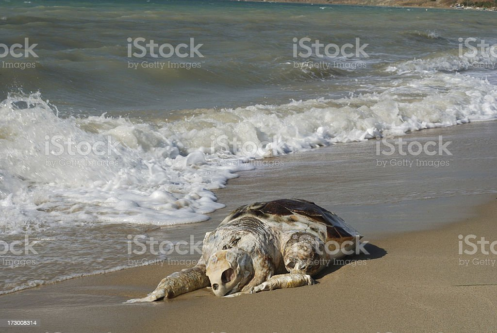 Dead Turtle royalty-free stock photo
