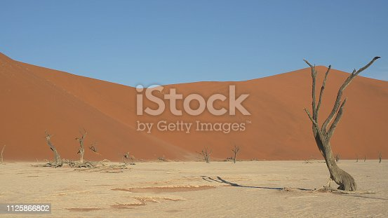 Sossusvlei is a salt and clay pan surrounded by high red dunes, located in the southern part of the Namib Desert, in the Namib-Naukluft National Park of Namibia. Death Valley in Namibia. Skeleton trees.